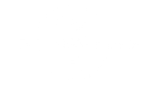 Big Minds School logo